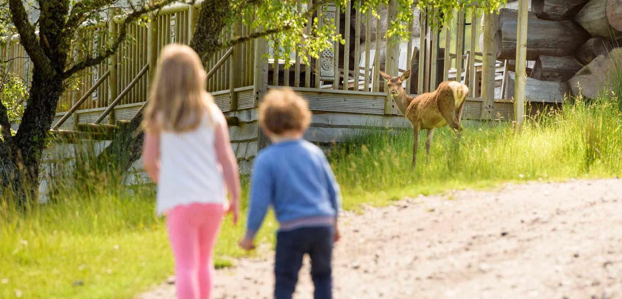 Kids watching tame deer at Eagle Brae